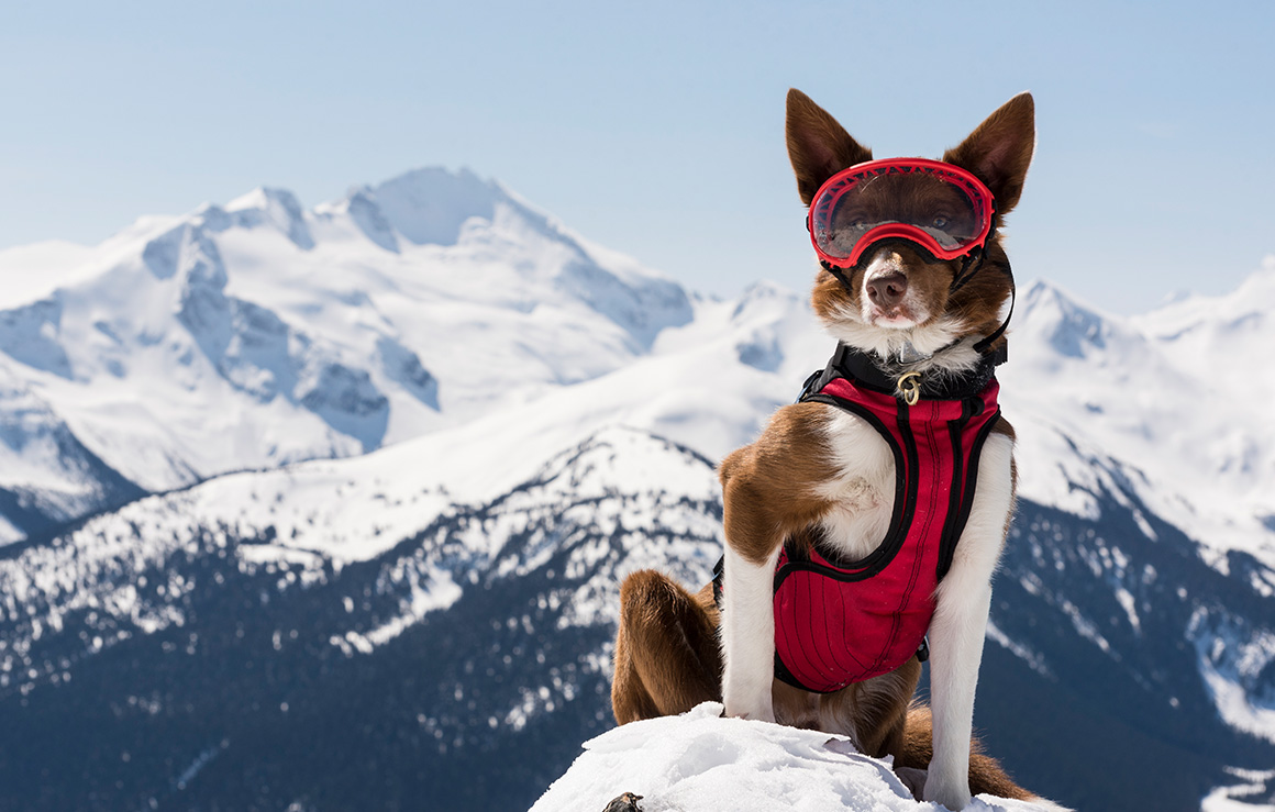 A dog with a vest and goggles in the mountains.