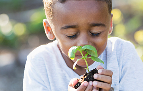 A young boy smelling a newly sprouted plant.
