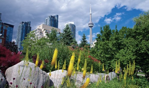 Photograph of a Toronto park with the CN Tower in the background